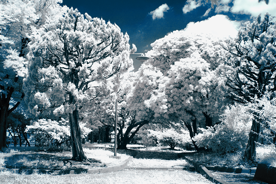 Infrared_first_detail_01