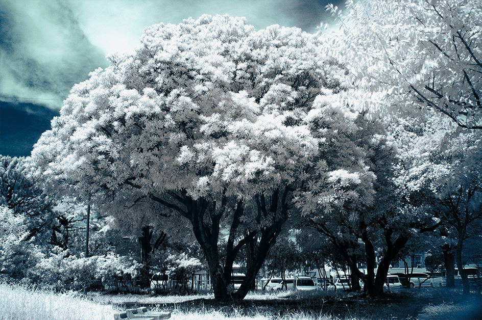 Infrared_first_detail_02