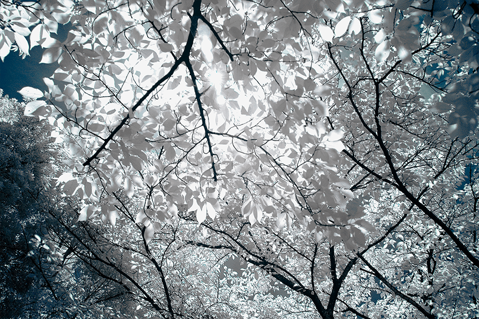 Infrared_first_detail_03