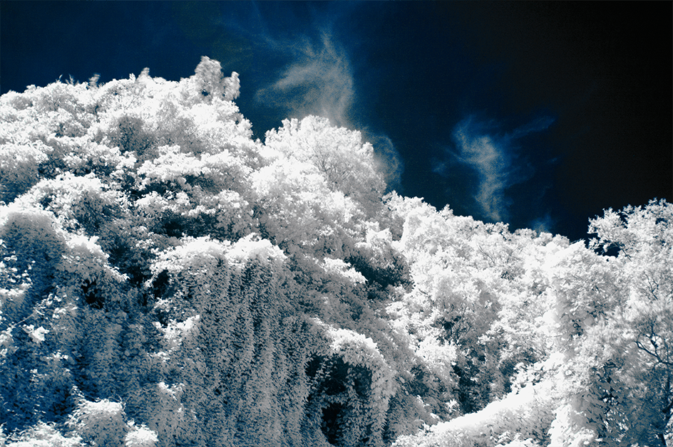 Infrared_first_detail_05