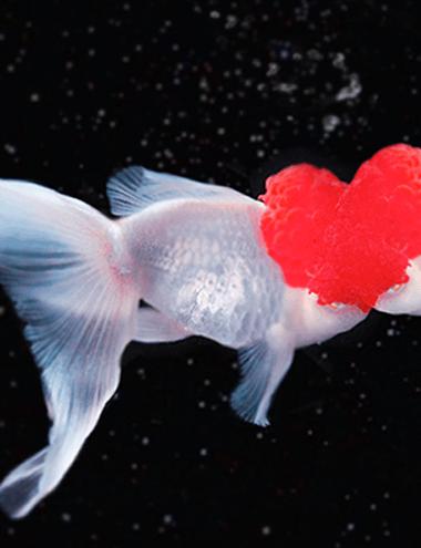 goldfish_thum