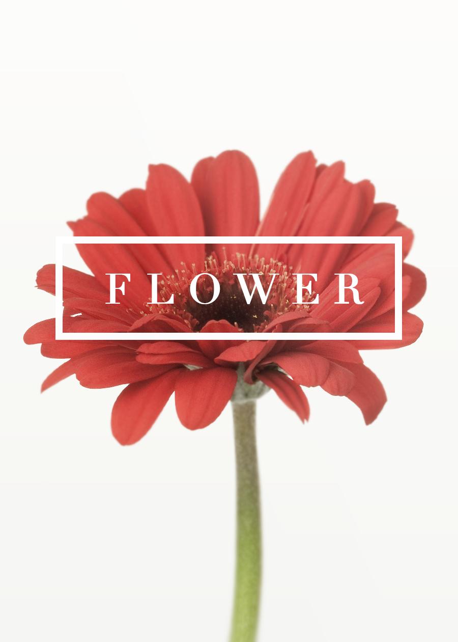 bloom_01