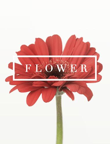 bloom_thum
